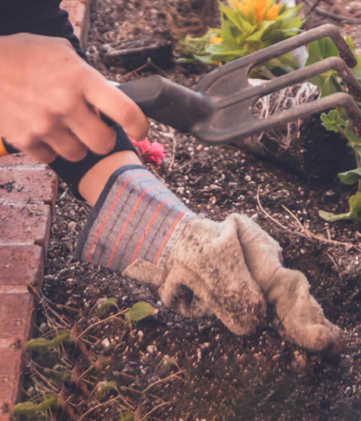 5 Tips for a Successful Garden